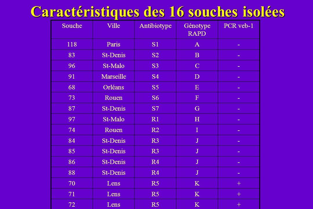 Caractéristiques des 16 souches isolées