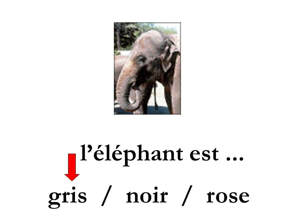 l'éléphant est ... gris / noir / rose