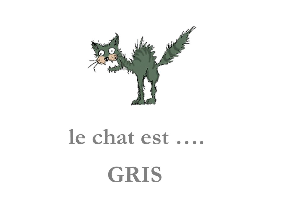 le chat est …. GRIS