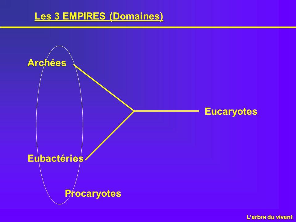 Les 3 EMPIRES (Domaines)