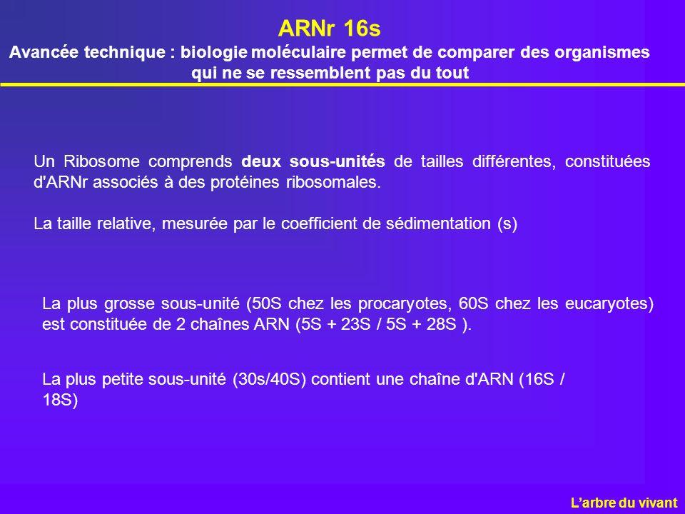 ARNr 16s Avancée technique : biologie moléculaire permet de comparer des organismes qui ne se ressemblent pas du tout