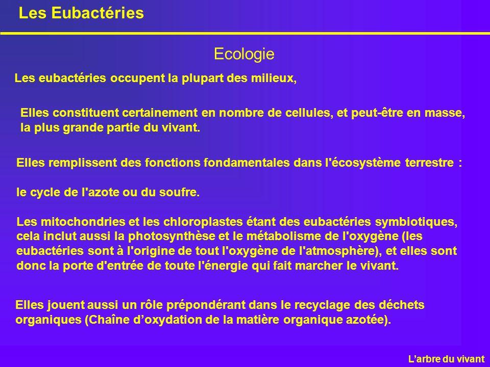 Les Eubactéries Ecologie