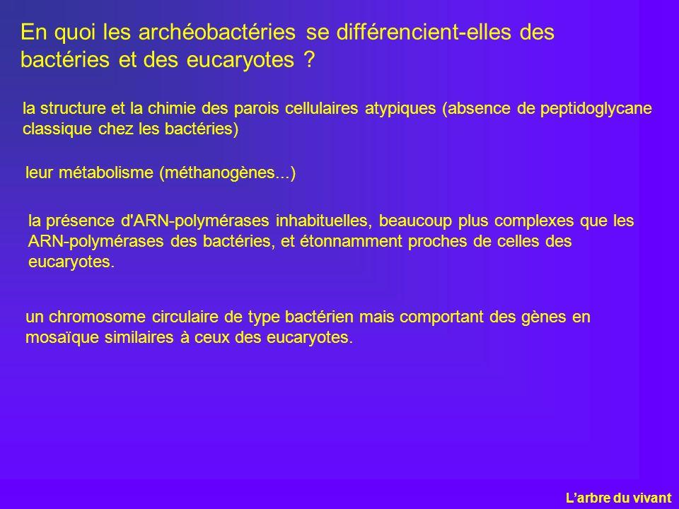 En quoi les archéobactéries se différencient-elles des bactéries et des eucaryotes