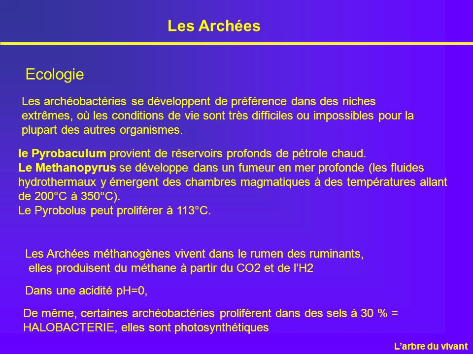 Les Archées Ecologie.