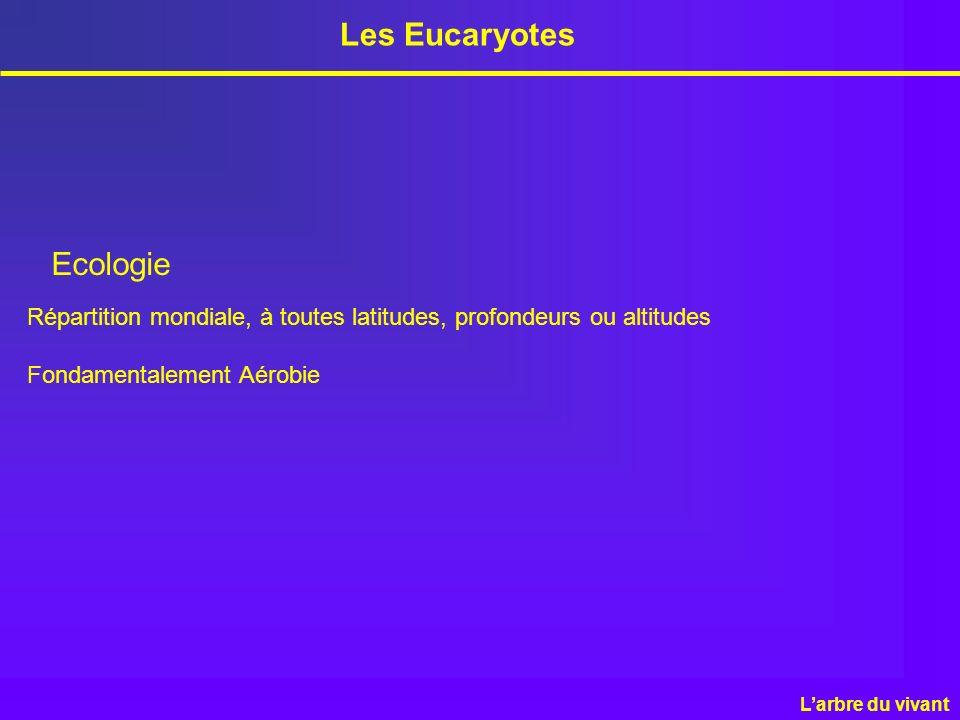 Les Eucaryotes Ecologie