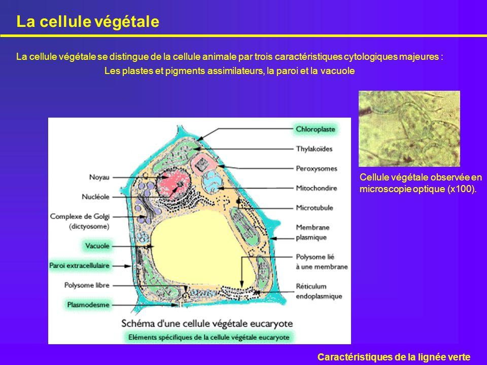 Les plastes et pigments assimilateurs, la paroi et la vacuole