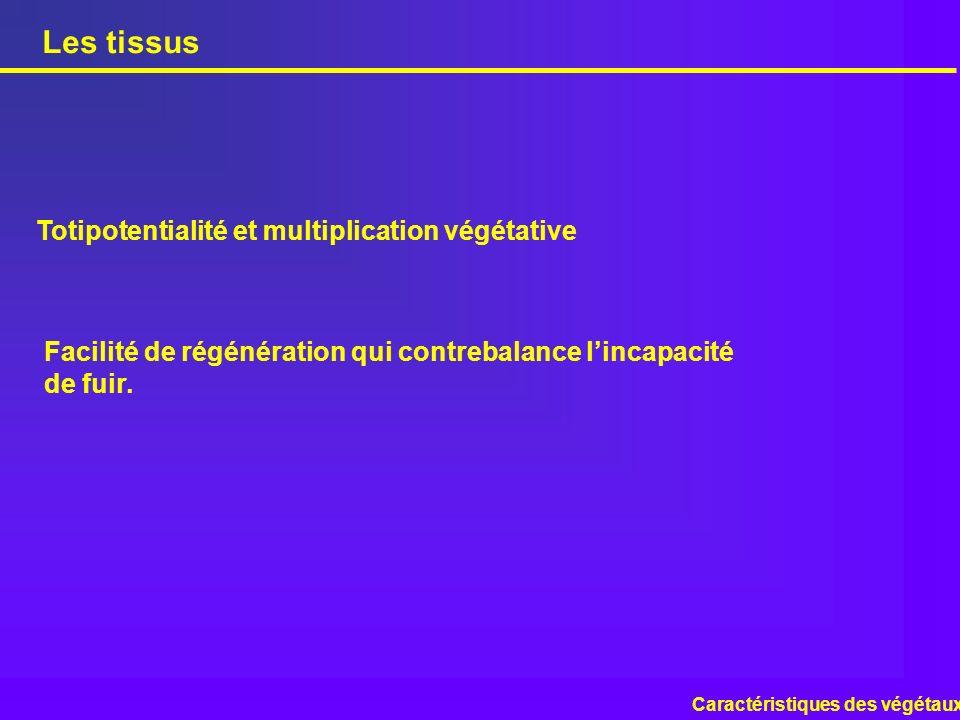 Les tissus Totipotentialité et multiplication végétative
