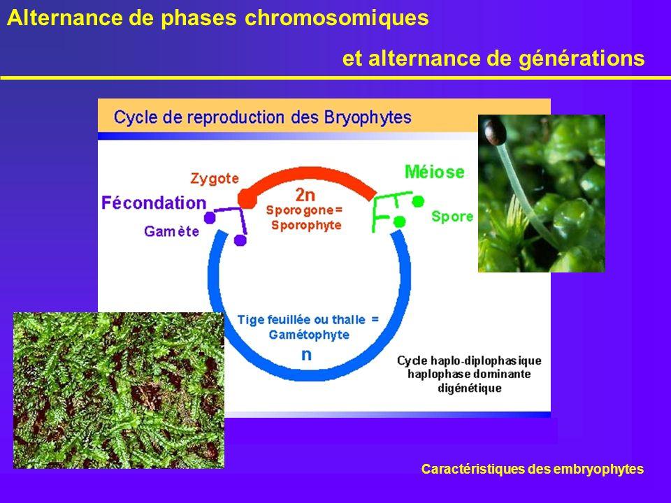 Alternance de phases chromosomiques et alternance de générations