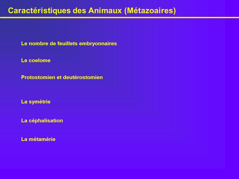 Caractéristiques des Animaux (Métazoaires)