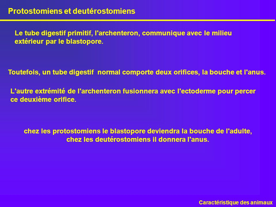 Protostomiens et deutérostomiens