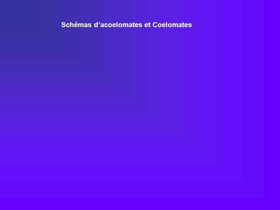 Schémas d'acoelomates et Coelomates