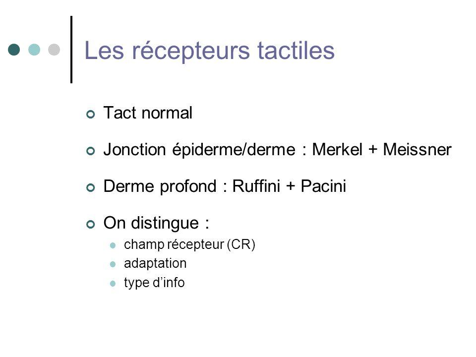 Les récepteurs tactiles