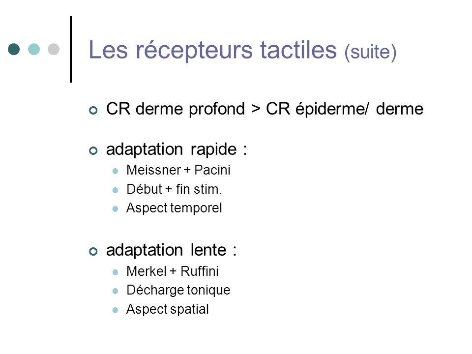 Les récepteurs tactiles (suite)