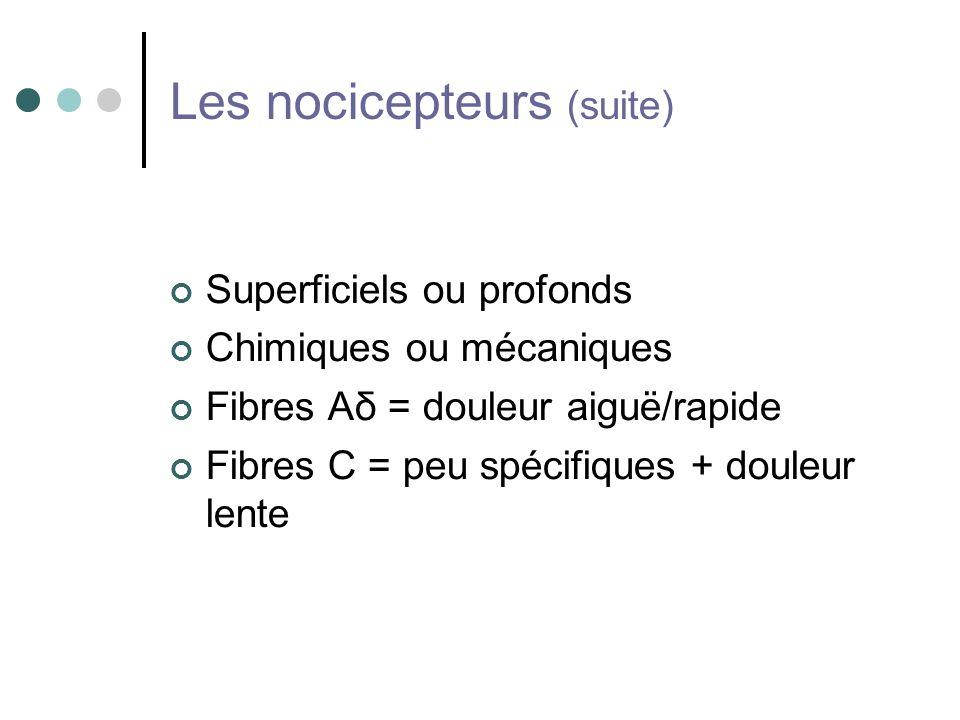 Les nocicepteurs (suite)
