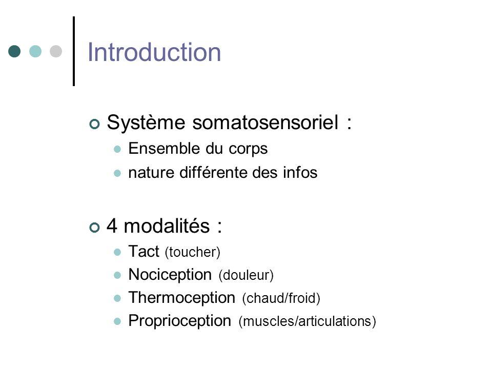 Introduction Système somatosensoriel : 4 modalités : Ensemble du corps