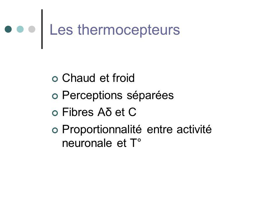Les thermocepteurs Chaud et froid Perceptions séparées Fibres Aδ et C