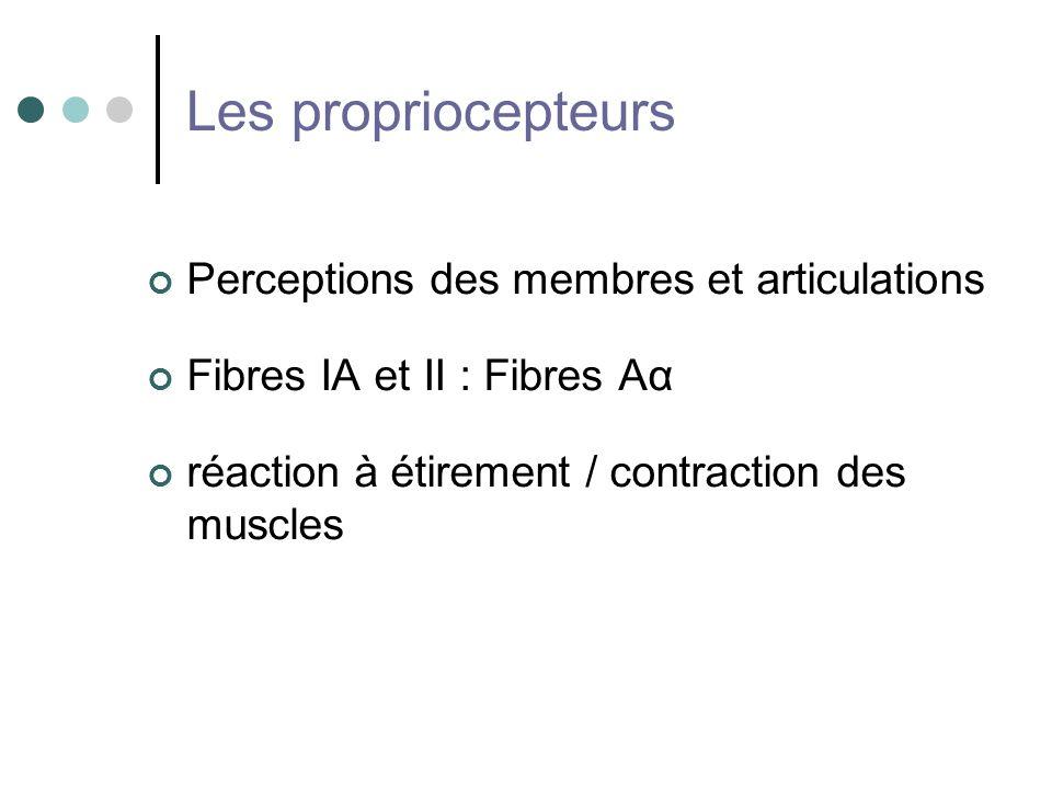 Les propriocepteurs Perceptions des membres et articulations