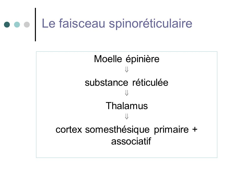 Le faisceau spinoréticulaire