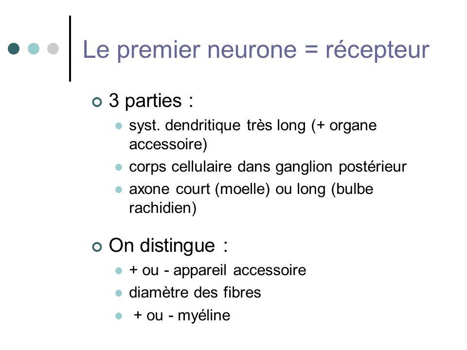Le premier neurone = récepteur