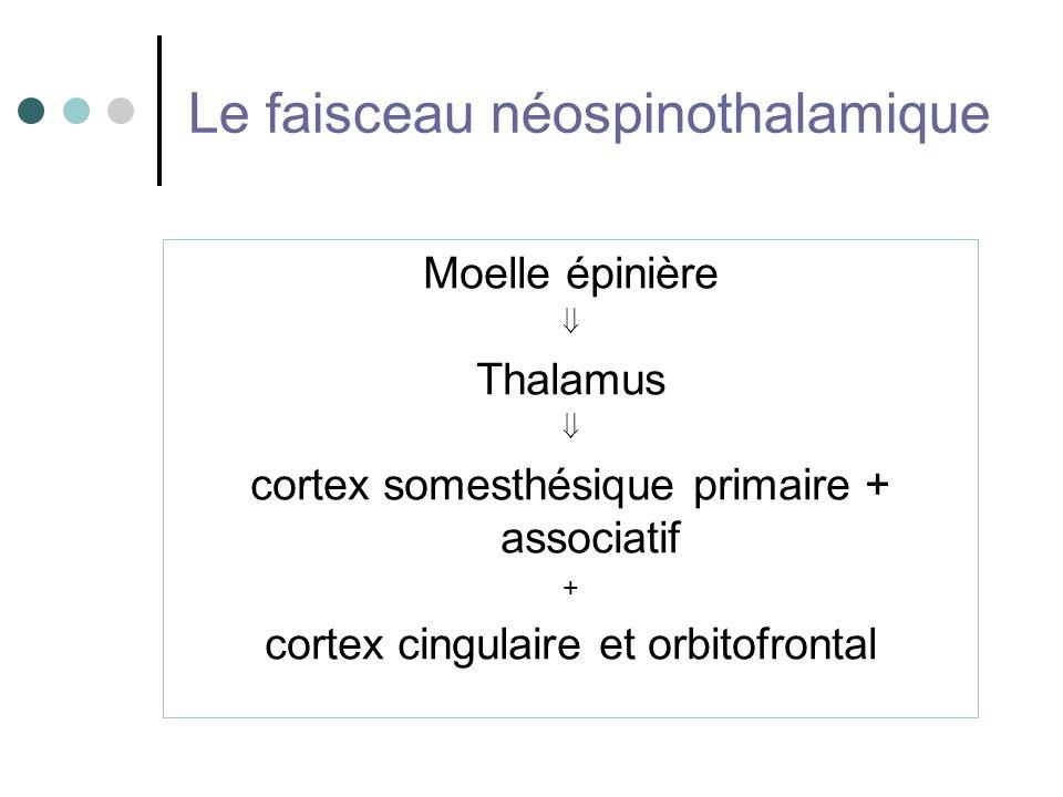 Le faisceau néospinothalamique