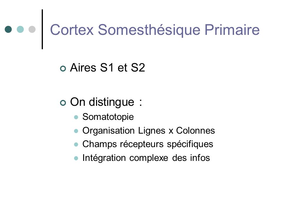 Cortex Somesthésique Primaire