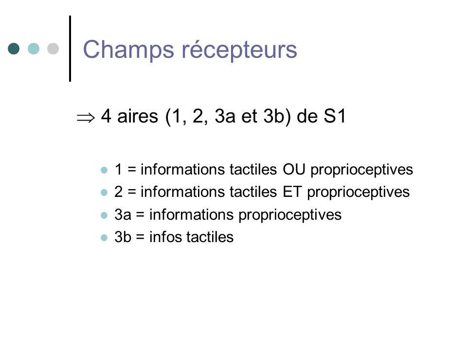 Champs récepteurs  4 aires (1, 2, 3a et 3b) de S1