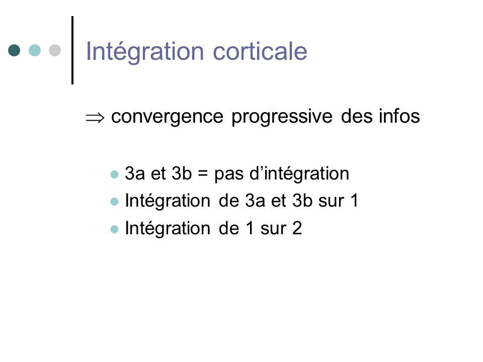 Intégration corticale