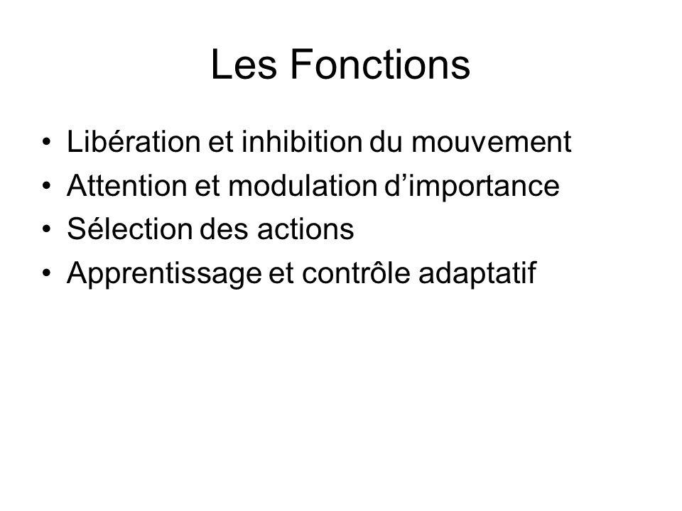 Les Fonctions Libération et inhibition du mouvement