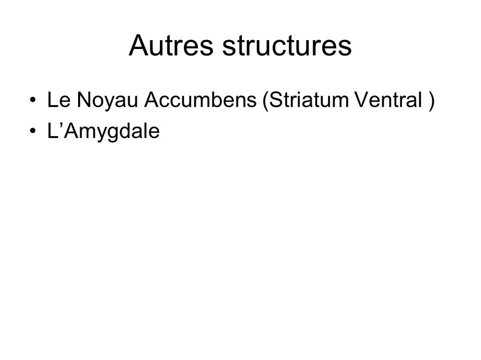 Autres structures Le Noyau Accumbens (Striatum Ventral ) L'Amygdale