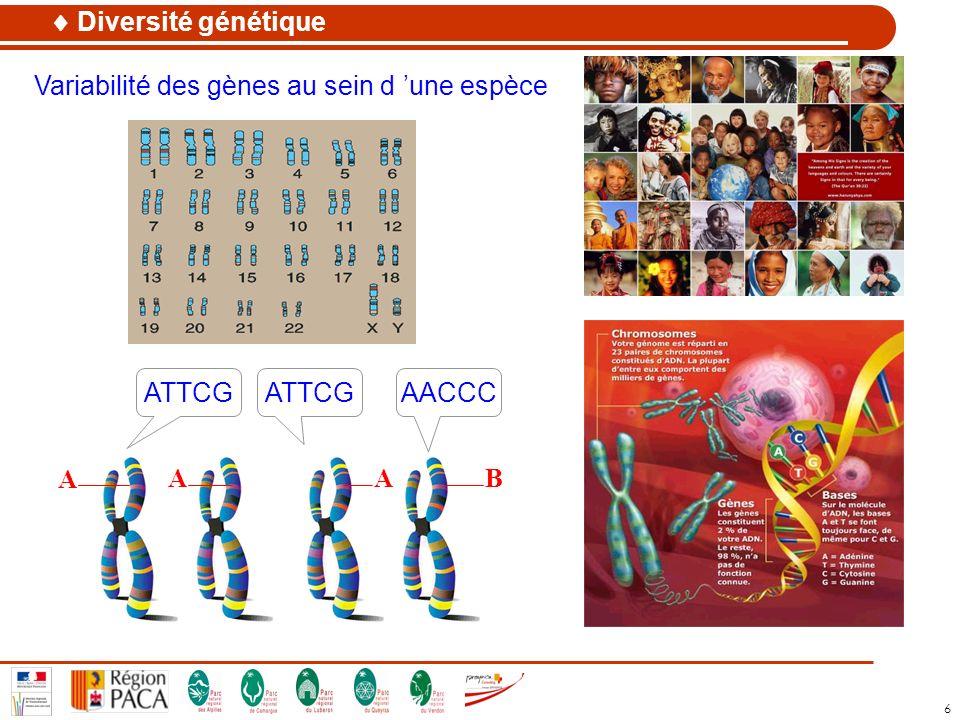 Diversité génétique Variabilité des gènes au sein d 'une espèce ATTCG ATTCG AACCC A A A B
