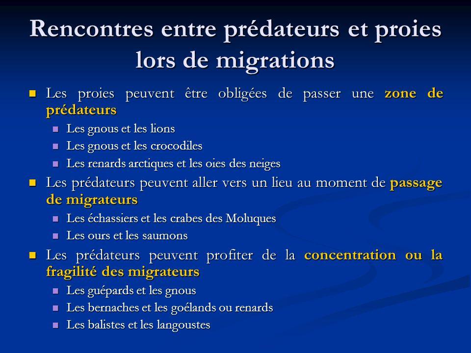 Rencontres entre prédateurs et proies lors de migrations