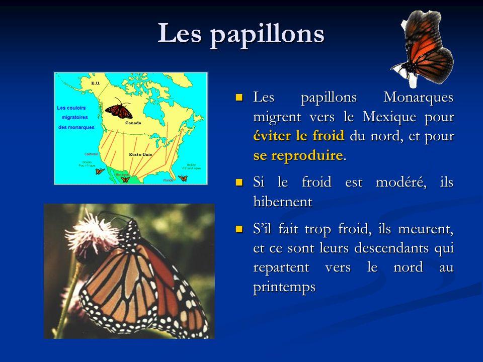 Les papillons Les papillons Monarques migrent vers le Mexique pour éviter le froid du nord, et pour se reproduire.