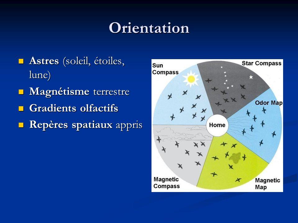 Orientation Astres (soleil, étoiles, lune) Magnétisme terrestre