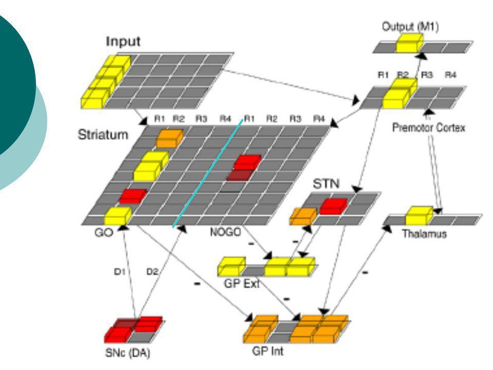 SANDRINE La majorité des neurones activant le Gpe active le GPi en plus. ->Beaucoup de neurones GPe convergent vers un seul de neurones STN.