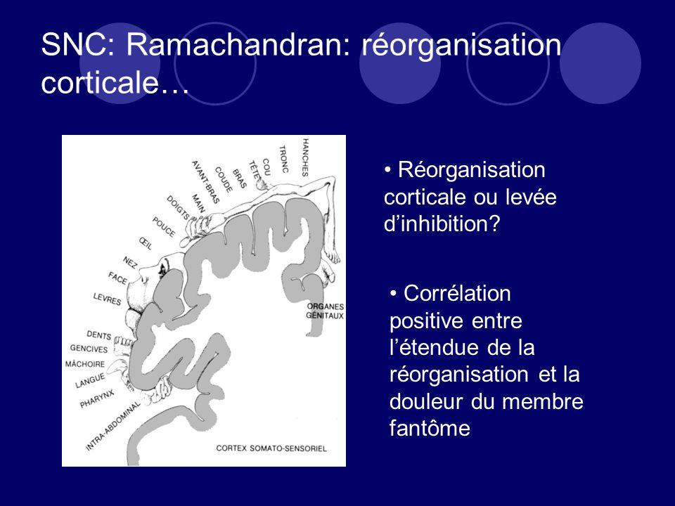 SNC: Ramachandran: réorganisation corticale…