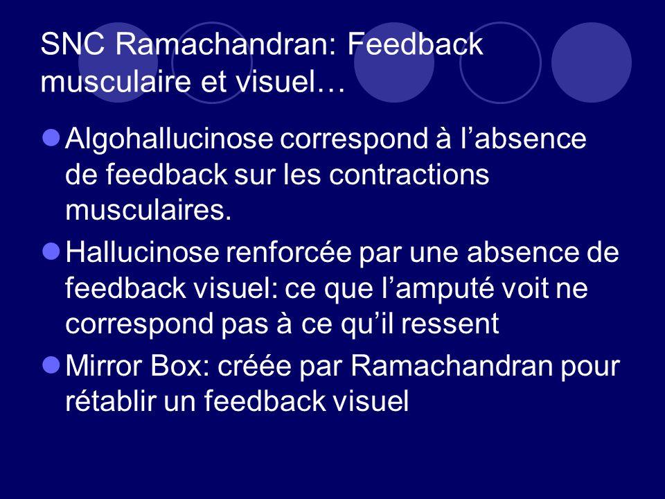 SNC Ramachandran: Feedback musculaire et visuel…