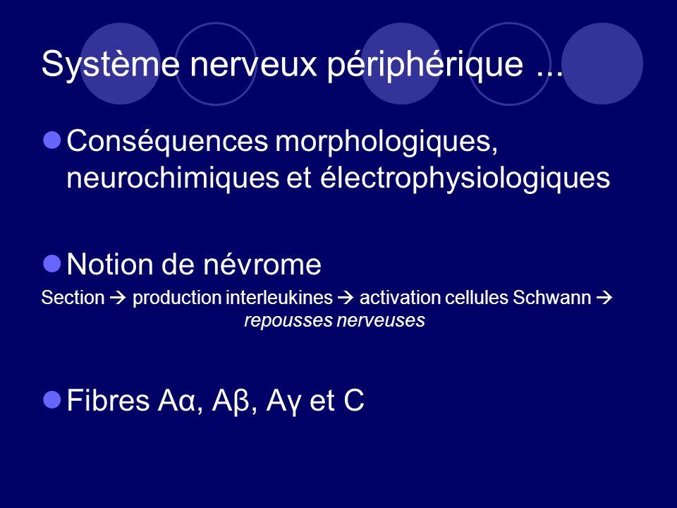 Système nerveux périphérique ...