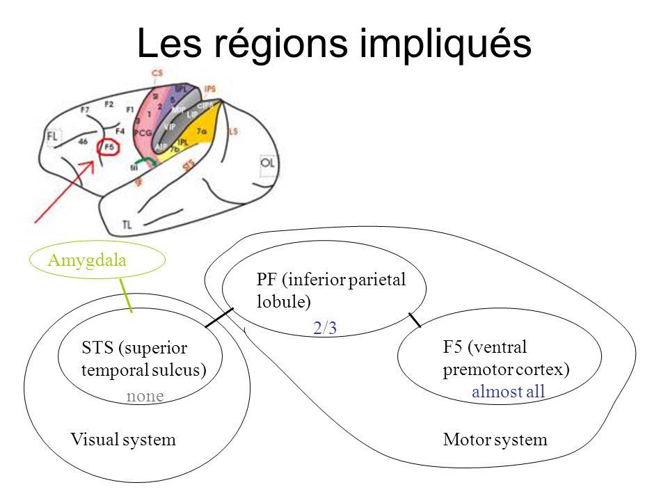 Les régions impliqués STS (superior temporal sulcus)