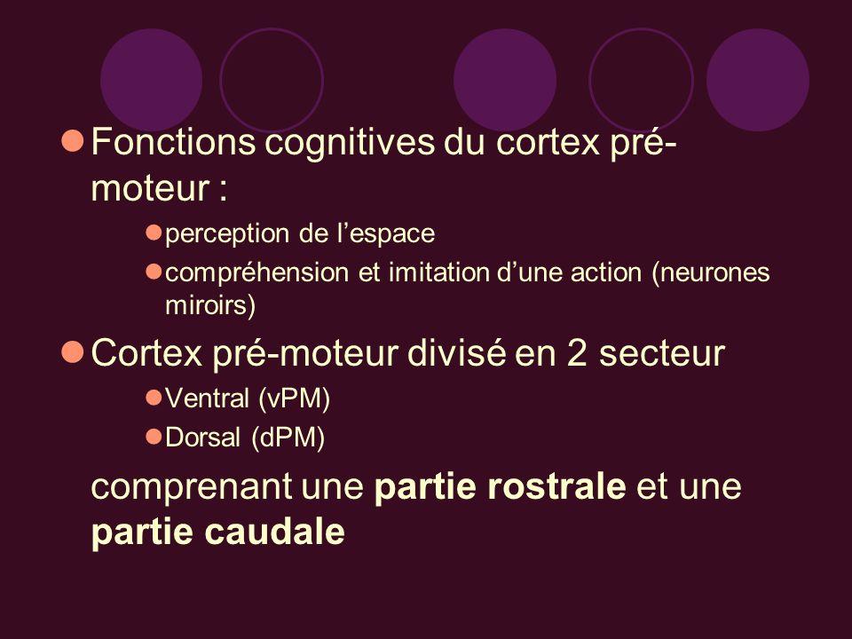 Fonctions cognitives du cortex pré-moteur :