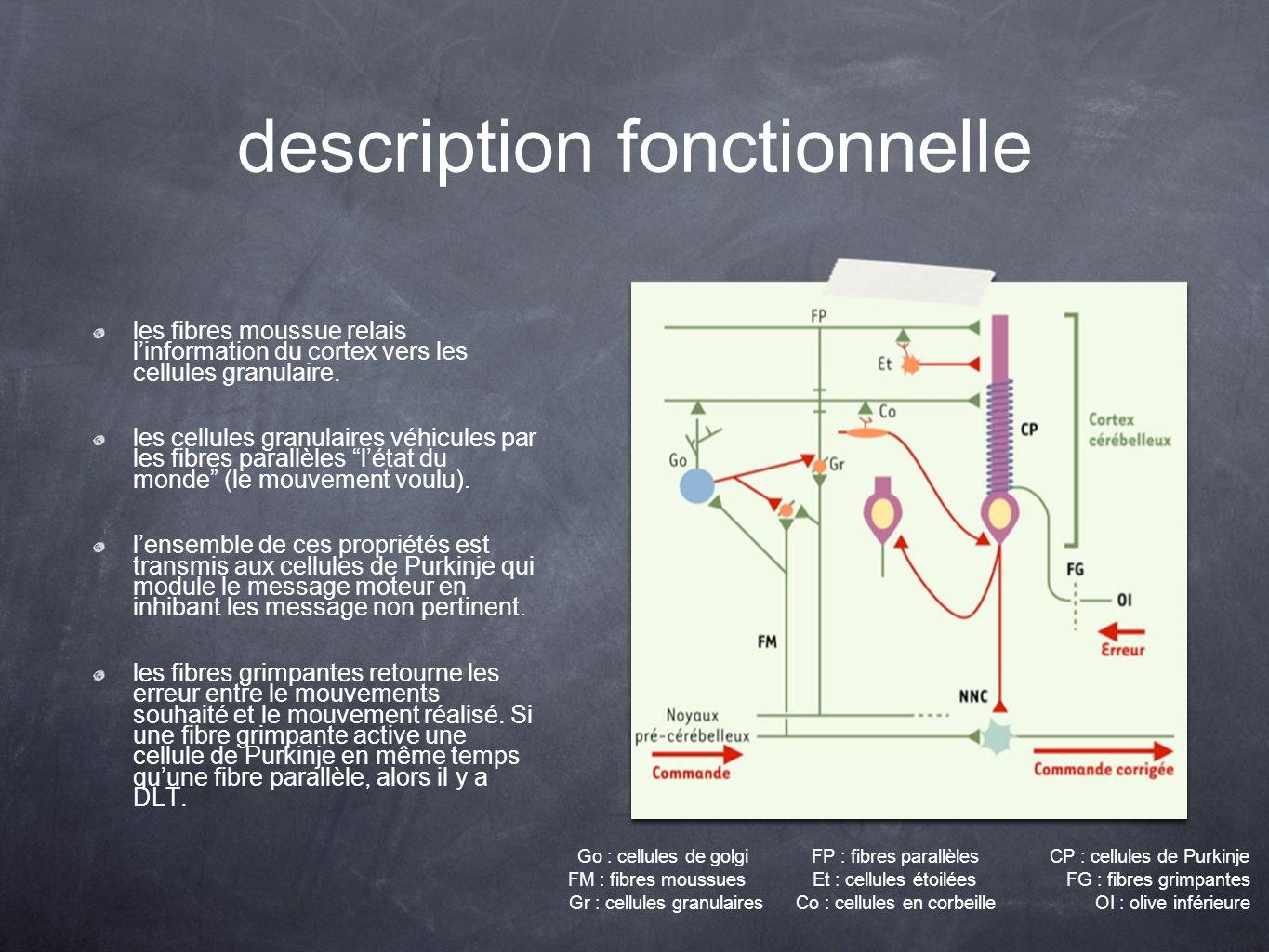 description fonctionnelle