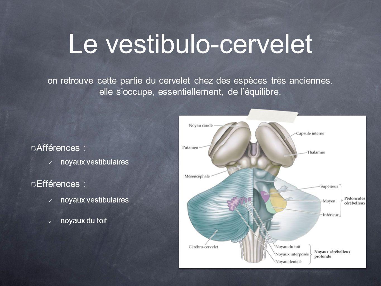 Le vestibulo-cervelet