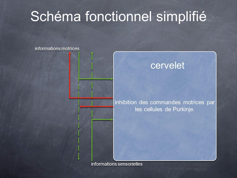 Schéma fonctionnel simplifié