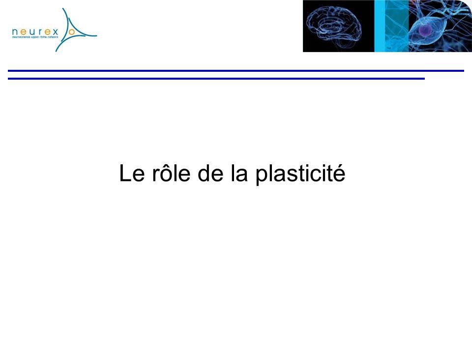 Le rôle de la plasticité