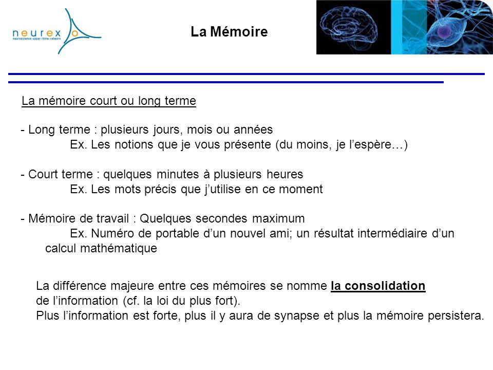 La Mémoire La mémoire court ou long terme