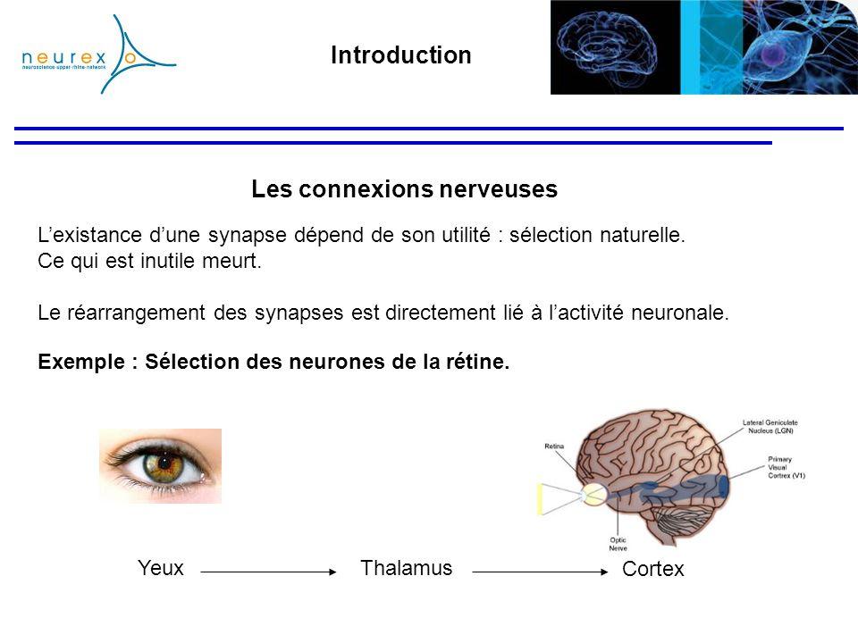 Les connexions nerveuses