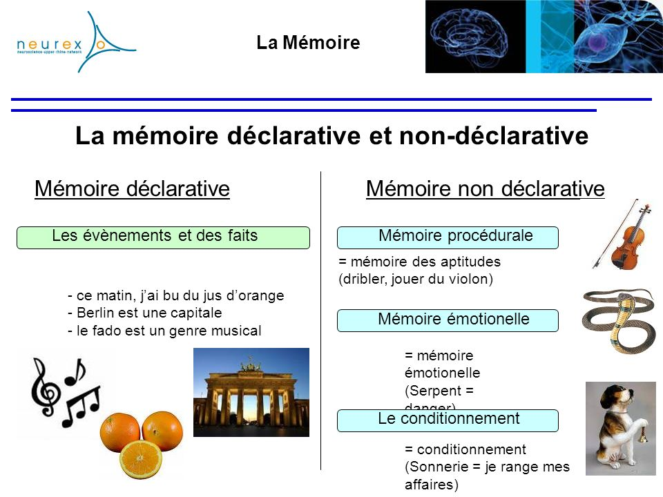 La mémoire déclarative et non-déclarative