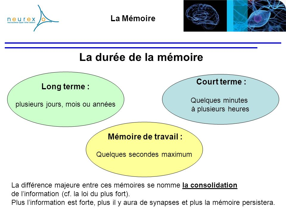 La durée de la mémoire La Mémoire Court terme : Long terme :