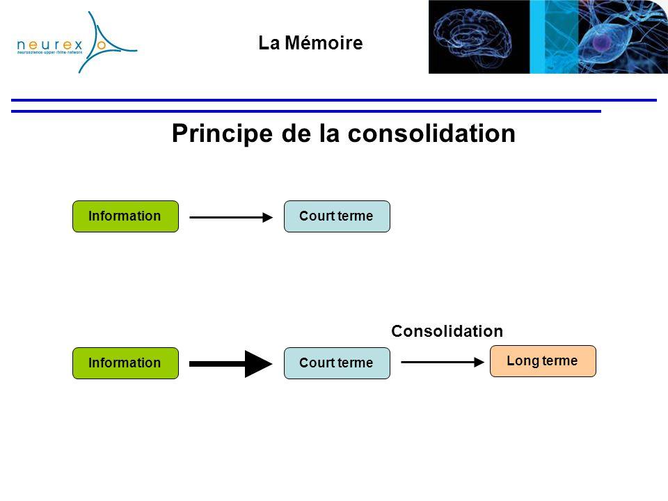 Principe de la consolidation