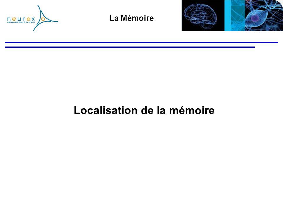 Localisation de la mémoire
