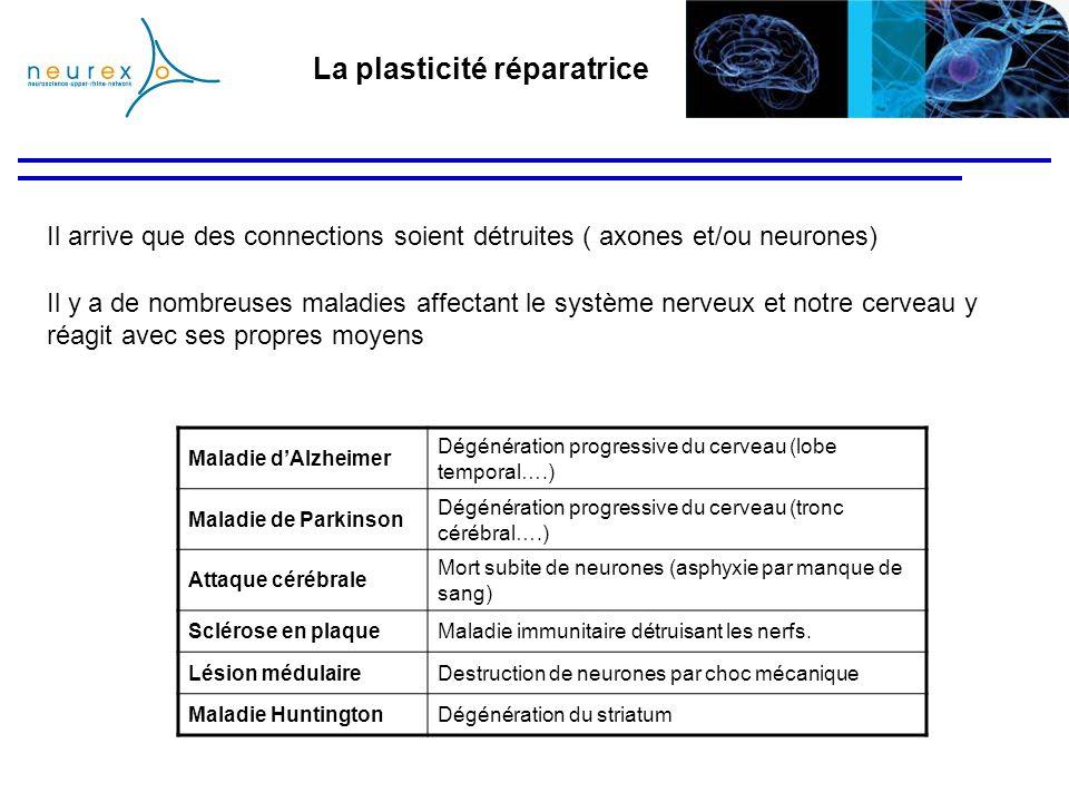 La plasticité réparatrice